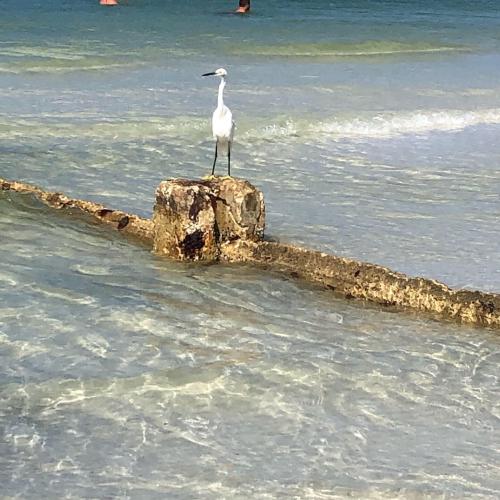 Ibis beach day