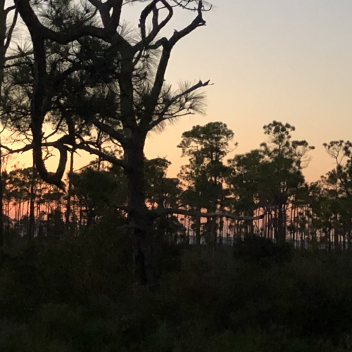 Evening at St. George Island campground