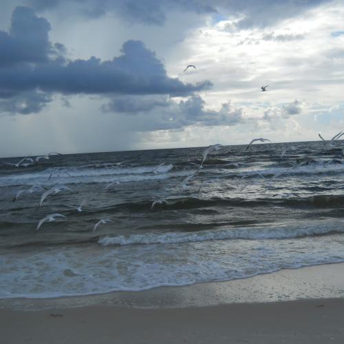 sea gulls in the wind