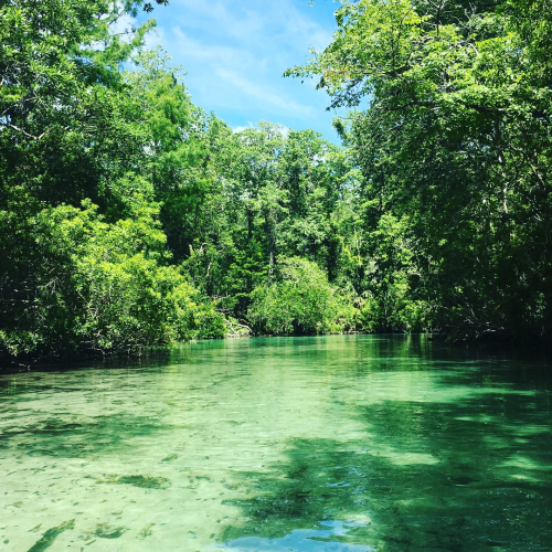 Serenity of Weeki Wachee