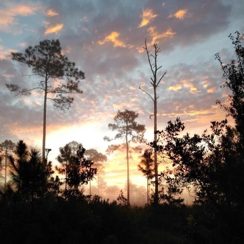 Hammock_Sunset