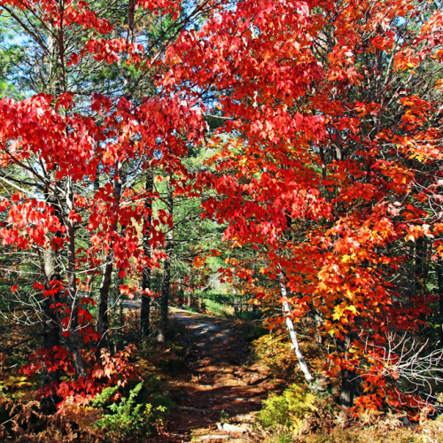 The Fall Trail