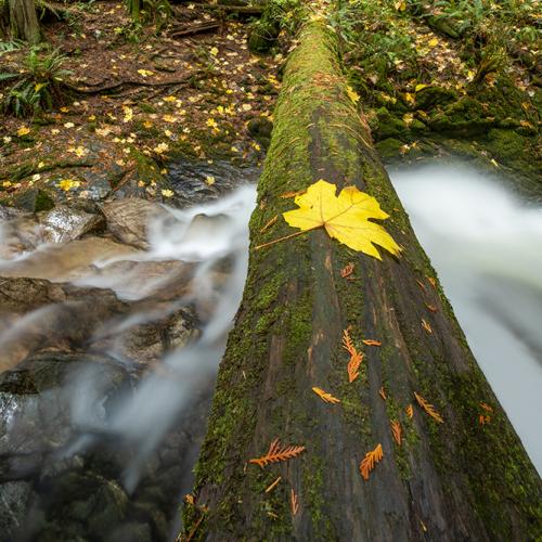 Autumn Rainforest