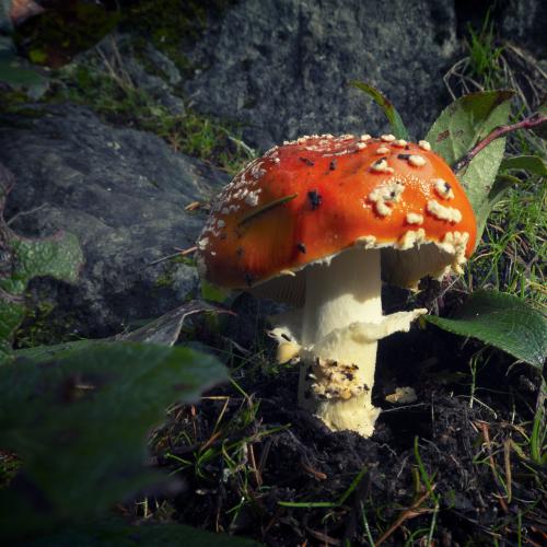One Fungi