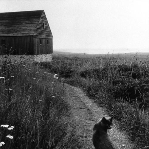 Louisburg Cat
