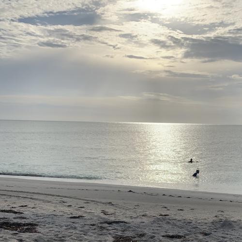 Rise, shine and swim!