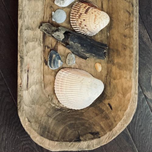 Shells shells and more shells!