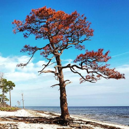 Fall color on the coast.
