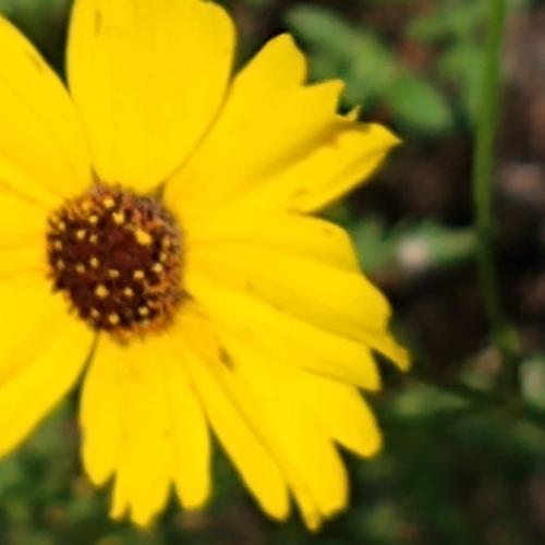 Wild Flowers in Myakka