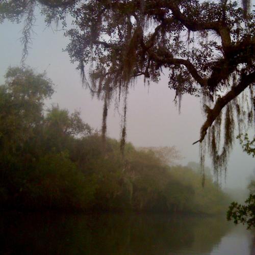 Kayaking Estero River