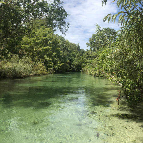 The Crystal Clear water at Weeki Wachee Springs