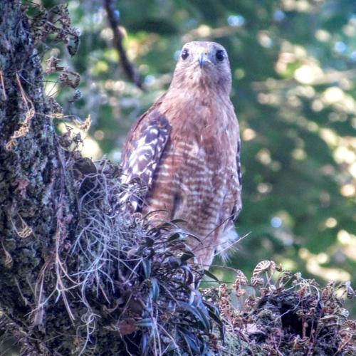 Hawk's View