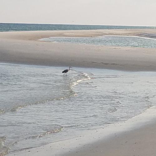 Gulf Beach Calm