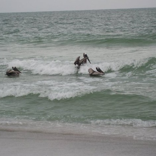 Ridin' the Waves!