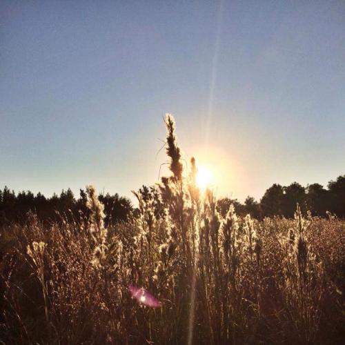 Sunset in Payne's Prairie