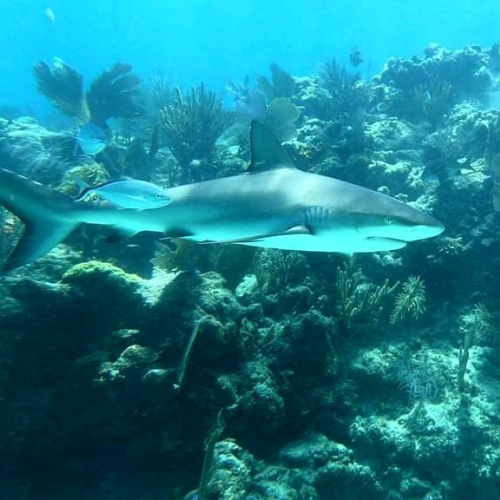 Cruising the reef