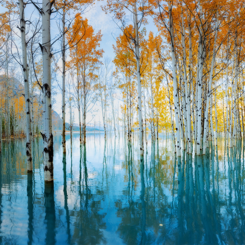 Trees of Abraham Lake
