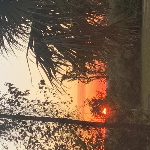 Sunset at Torreya State Park