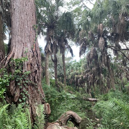 Florida Untouched