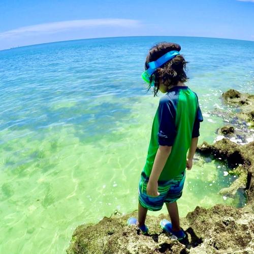 Snorkeling Indian Key