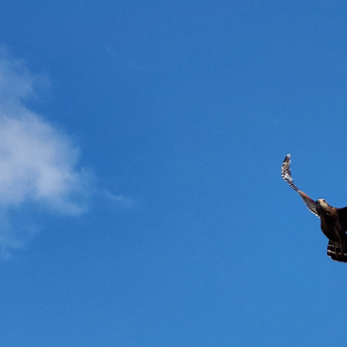 Soaring in The Clear Blue Skies