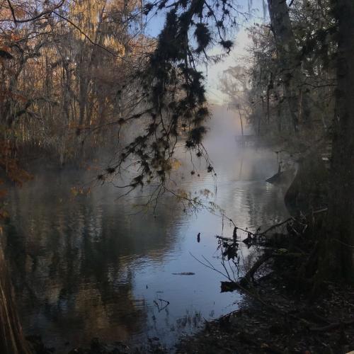 Manatee Morning Mist