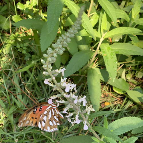 Butterfly's!