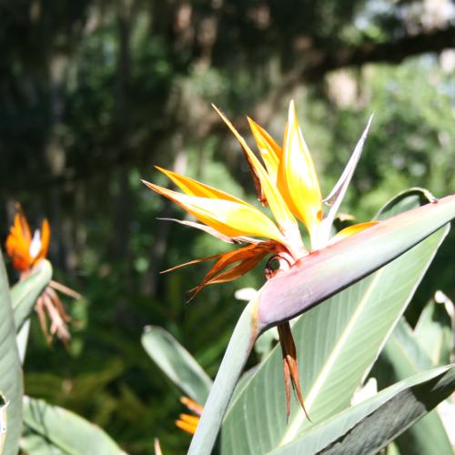 Flower in Paradise