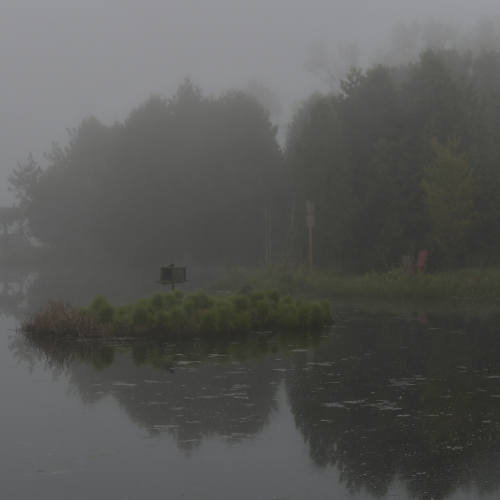 Natural pond on a foggy day