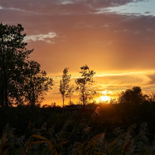 Sunset along the marsh