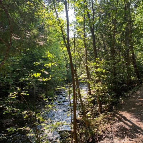 What a Beautiful Walking Trail
