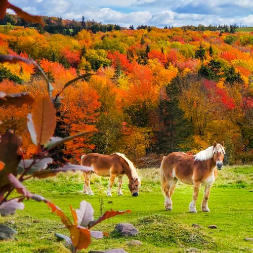 Autumn Daydream 🍂